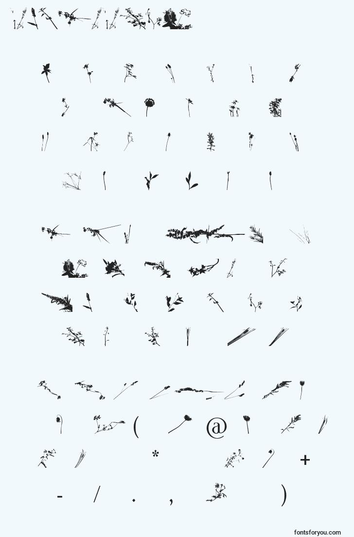 characters of floralflush font, letter of floralflush font, alphabet of  floralflush font