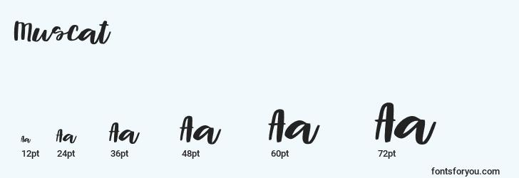 sizes of muscat font, muscat sizes